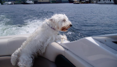 Brillo in the boat - the wind running through his hair
