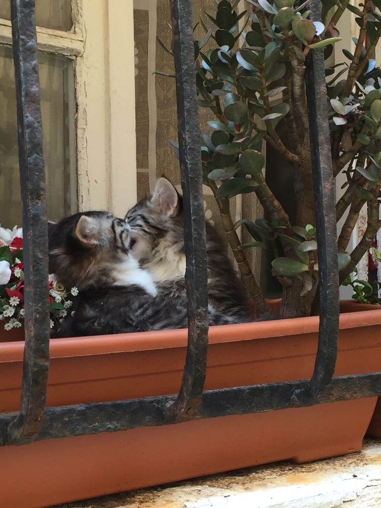 Two kittens playing in a window flower box in Antibes