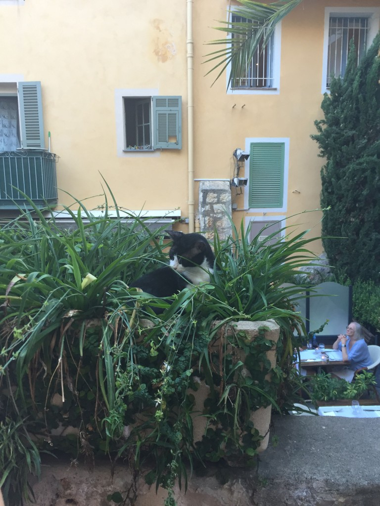 One of numerous Villefranche street cats playing in a flower planter