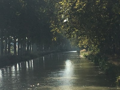 Canal du Midi with still healthy plane (sycamore) trees